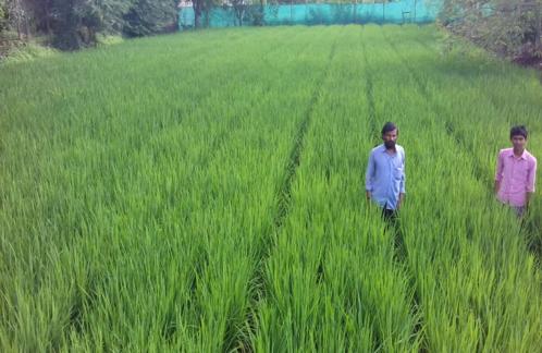 RPF Farmer