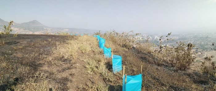 3 the fire engulfed the grass on both sides of the plantation line yet the svt sleeves and the plants inside were very safe