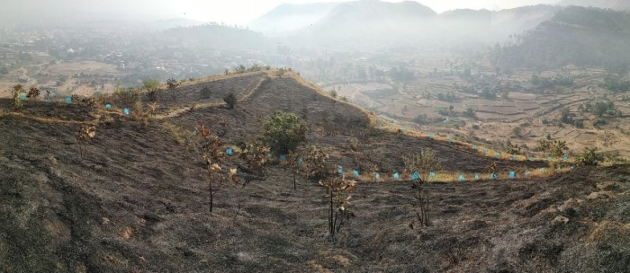 6 the miracle the vast burnt area didn't burn the svt sleeves and protected the plantation