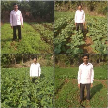 Mr Dattu Agivale, Karjat, Raigad (Shepu, Brinjal, Okra, Fenugreek, by SRT)