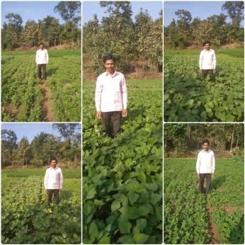 Mr Dattu Agivale, Karjat, Raigad (Cow pea, Moong, lablab beans, groundnut by SRT)