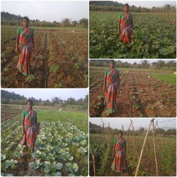 Mrs Indu Agivale, Karjat, Raigad (Tomato, Cabbage, okra, Brinjal, bitter gourd by SRT)