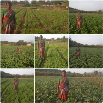 Mrs Indu Agivale, Karjat, Raigad (Cow pea, lablab beans, fenugreek, moong bean, mat bean, okra, by SRT)