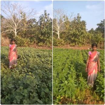 Mrs Suwarna Agivale, Karjat, Raigad (Moong bean and cow pea by SRT))