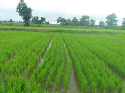 Tryambak Samusakade Chimur Chandrapur
