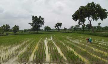 Dharmpal Vanakhede Masal Bhandara
